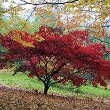 Batsford Arboretum and Garden Centre